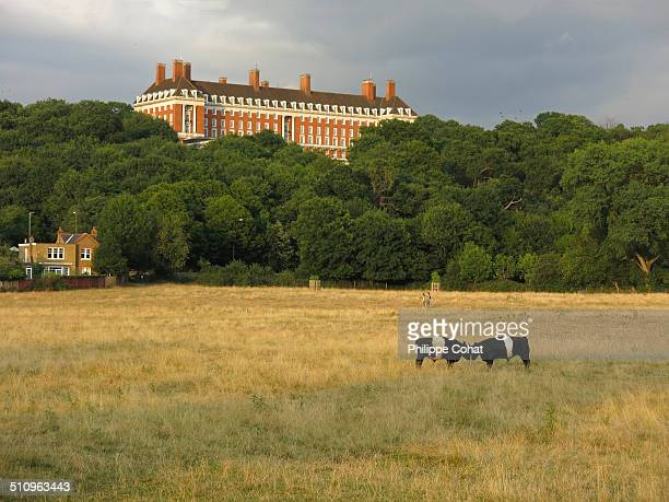 Petersham Meadows along the Thames and the Star & Garter Home on Richmond Hill.