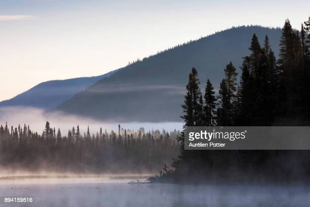 petit lac cascapédia, aube brumeuse - gaspe peninsula stock pictures, royalty-free photos & images