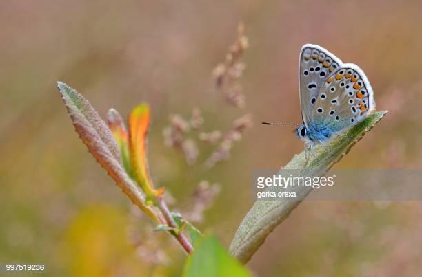 petite bleu dans biscarrosse - biscarrosse photos et images de collection