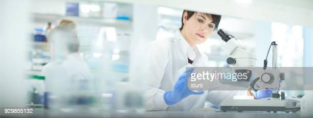 petri dish analysis - bioquímico imagens e fotografias de stock