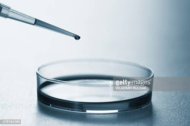 Petri dish and pipette