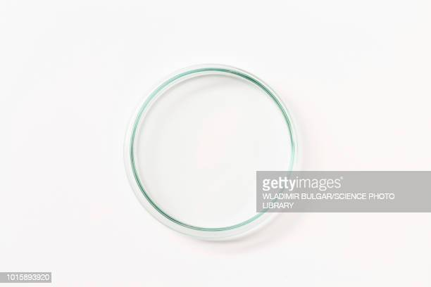 petri dish - petri dish stock pictures, royalty-free photos & images