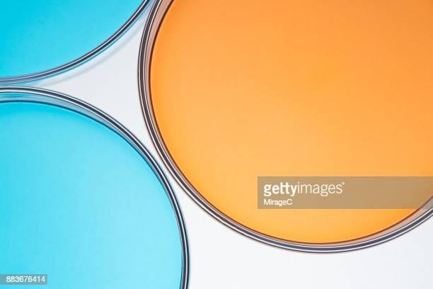 petri dishes comparison - microbiologia imagens e fotografias de stock