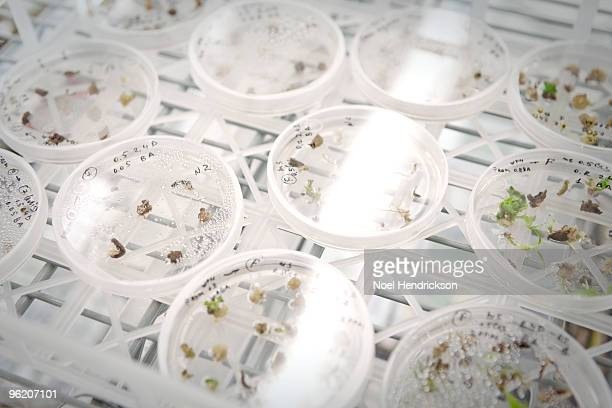 petri dishes of plant matter