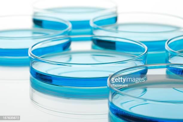 Petri Gerichte