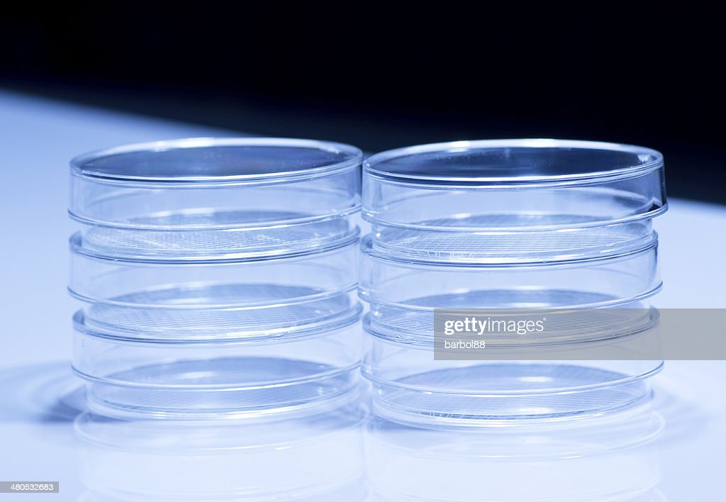 Petri dishes : Stock Photo