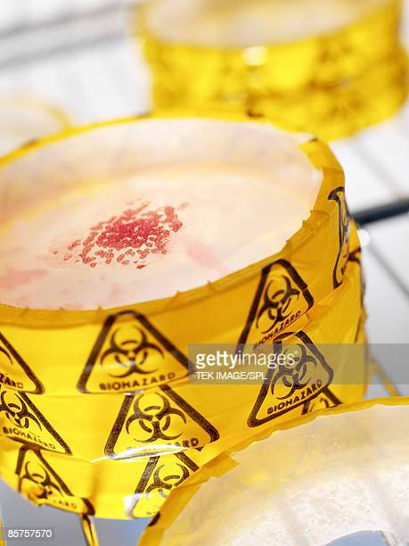 petri dishes stacked up in fridge - agar jelly stock photos and pictures