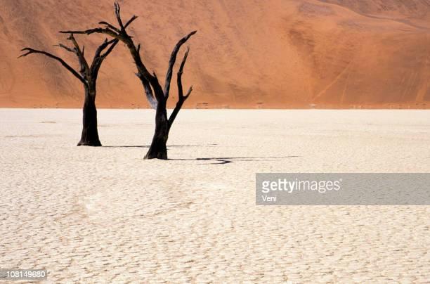 Petrified acacia in the Namib Desert, Namibia