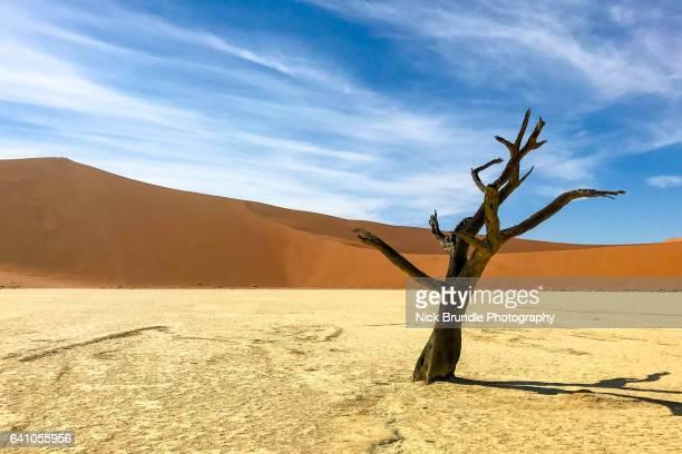 Petrified Forest, Deadvlei, Namib desert, Namibia, Africa