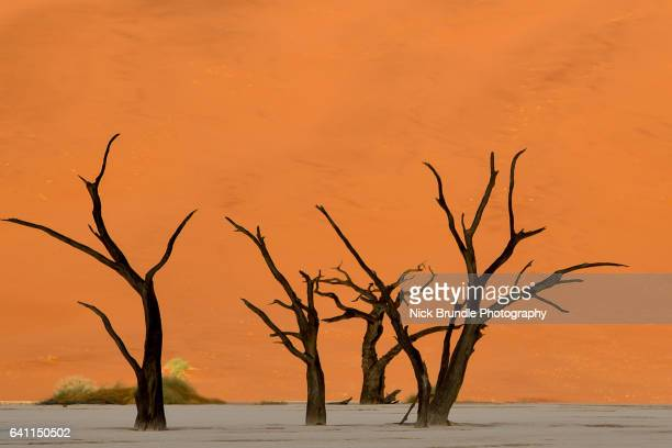 petrified forest, deadvlei, namib desert, namibia, africa - petrified wood stock pictures, royalty-free photos & images
