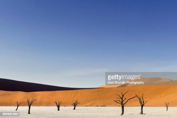 petrified forest, deadvlei, namib desert, namibia, africa - southern africa stock pictures, royalty-free photos & images