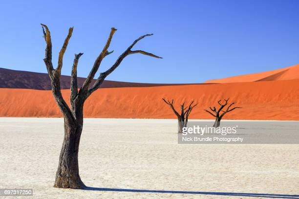 petrified forest, deadvlei, namibia, africa - namib naukluft national park stock pictures, royalty-free photos & images