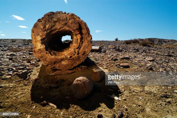 Petrified Forest 'Jose Ormachea' Sarmiento Province of Chubut Patagonia Argentina South America