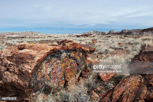 petrified forest national park, arizona, usa - petrified wood stock pictures, royalty-free photos & images