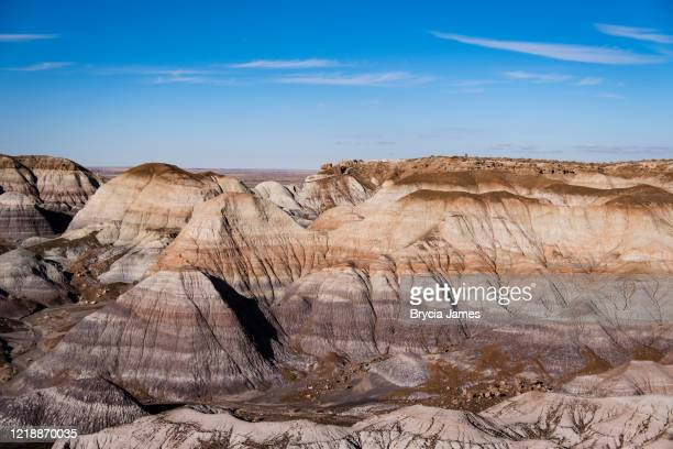petrified forest national park - brycia james stock pictures, royalty-free photos & images