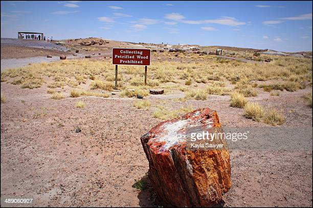 CONTENT] Petrified Forest National Park