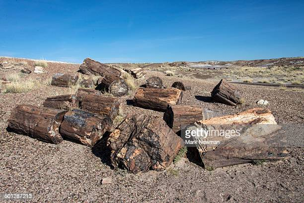 petrified forest national park - petrified log stock pictures, royalty-free photos & images