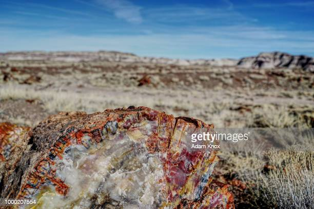 petrified forest - petrified wood stock pictures, royalty-free photos & images