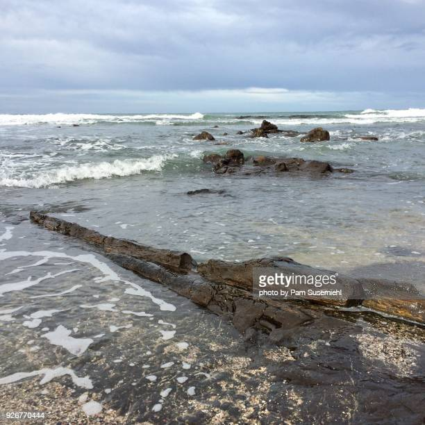 petrified log at water's edge, curio bay, new zealand - petrified log stock pictures, royalty-free photos & images