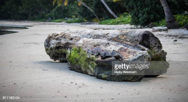 petrified log - petrified wood stock pictures, royalty-free photos & images