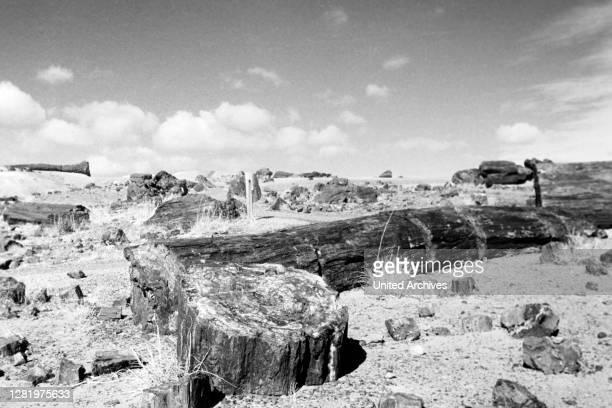 Petrified Logs at Petrified Forest National Park, Arizona, 1962.