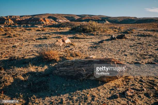 petrified logs in the petrified forest national park, sarmiento chubut. patagonia argentina - argentina stock pictures, royalty-free photos & images