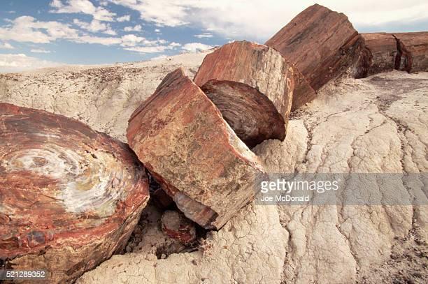 Petrified Logs