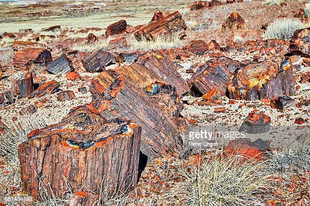 Petrified Logs,Petrified Forest National Park