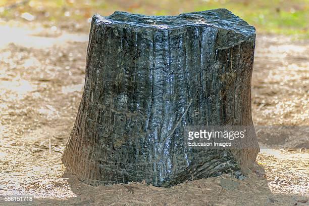 Petrified tree trunk in Kentucky.