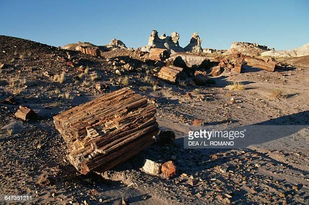 Petrified trunks Blue Mesa Petrified Forest National Park Arizona United States of America