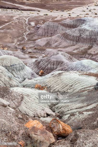 petrified wood and colourful rock formations, in the painted desert, in arizona - petrified log stock pictures, royalty-free photos & images