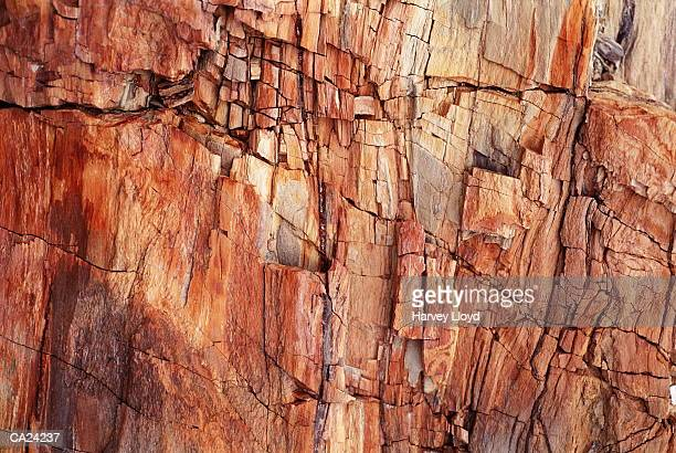 petrified wood, close-up - petrified wood stock pictures, royalty-free photos & images