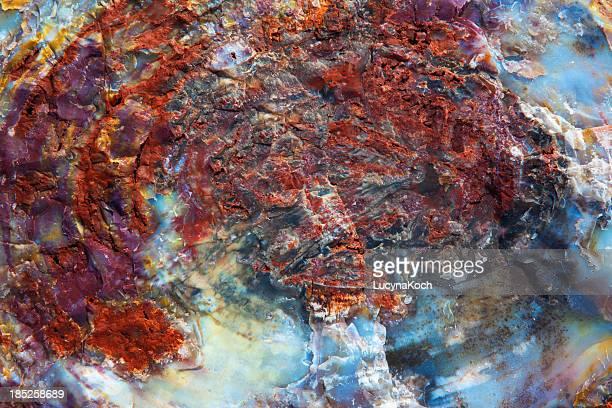 versteinertes holz fossil - lucyna koch stock-fotos und bilder