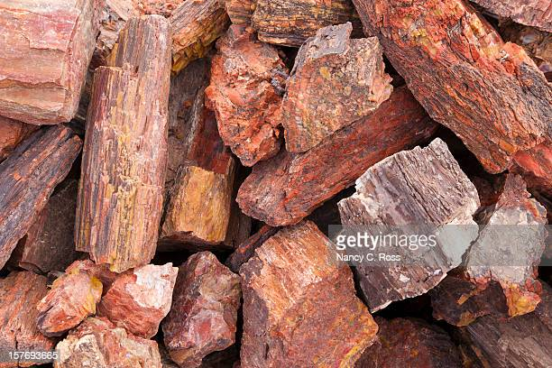 petrified wood in pile, fossil, close-up, background - petrified wood stock pictures, royalty-free photos & images
