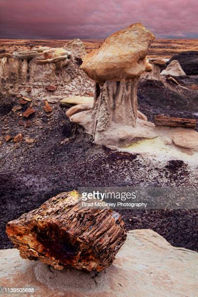 petrified wood in the bisti badlands - petrified wood stock pictures, royalty-free photos & images