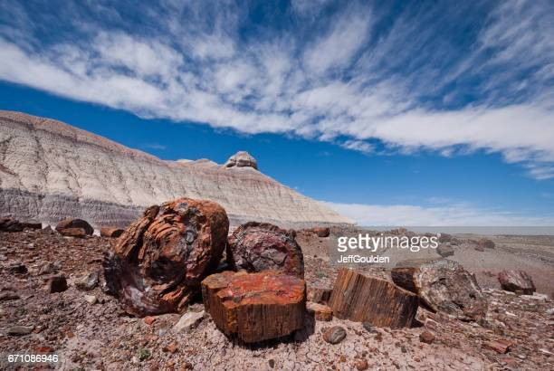 petrified logs at crystal forest - petrified wood stock pictures, royalty-free photos & images