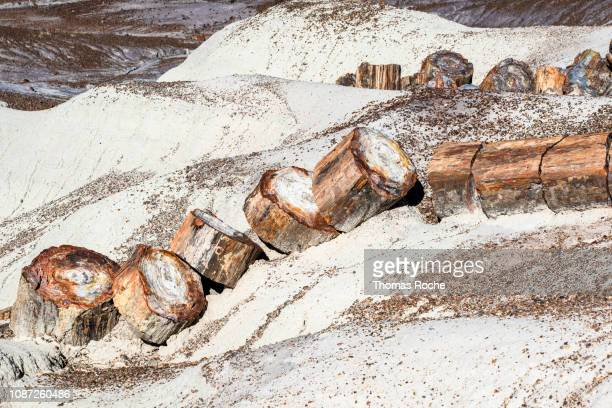 a petrified wood log in the desert - petrified wood stock pictures, royalty-free photos & images