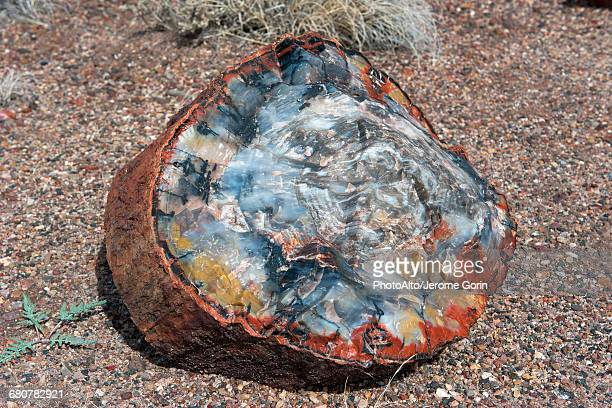 petrified wood - petrified wood stock pictures, royalty-free photos & images
