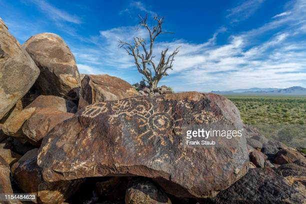 petroglyph - snag tree stock pictures, royalty-free photos & images