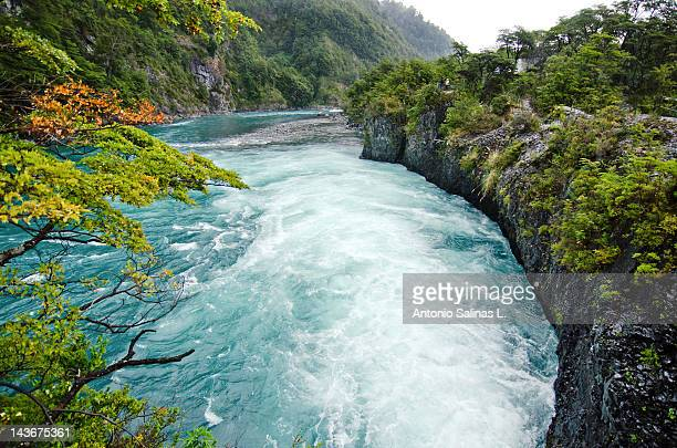 petrohué river with native nature - petrohue river stock photos and pictures