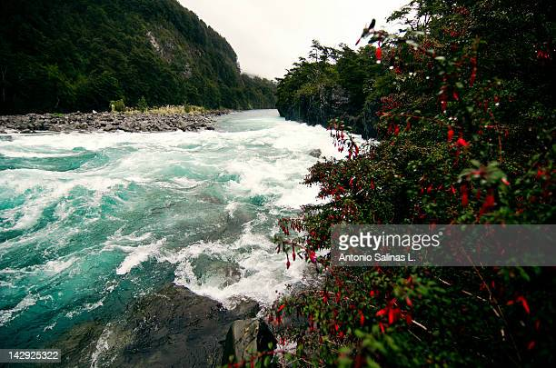 petrohue river - petrohue river stock photos and pictures
