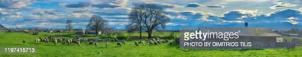 petroporos pasturlands panorama - dimitrios tilis stock pictures, royalty-free photos & images