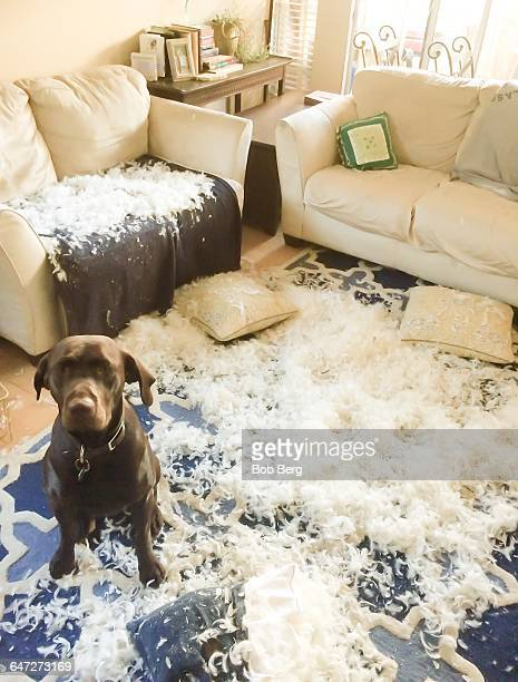 pets caught in the act!  - ruined stock pictures, royalty-free photos & images