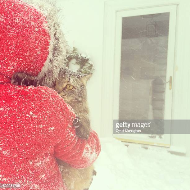pets in the snow - emergency shelter stock pictures, royalty-free photos & images