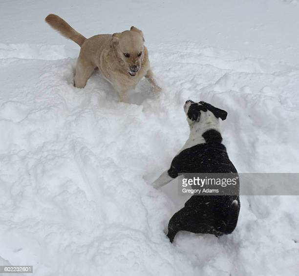 Pets in the Snow