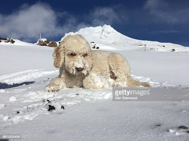 pets in the snow - dan sherwood photography stock pictures, royalty-free photos & images