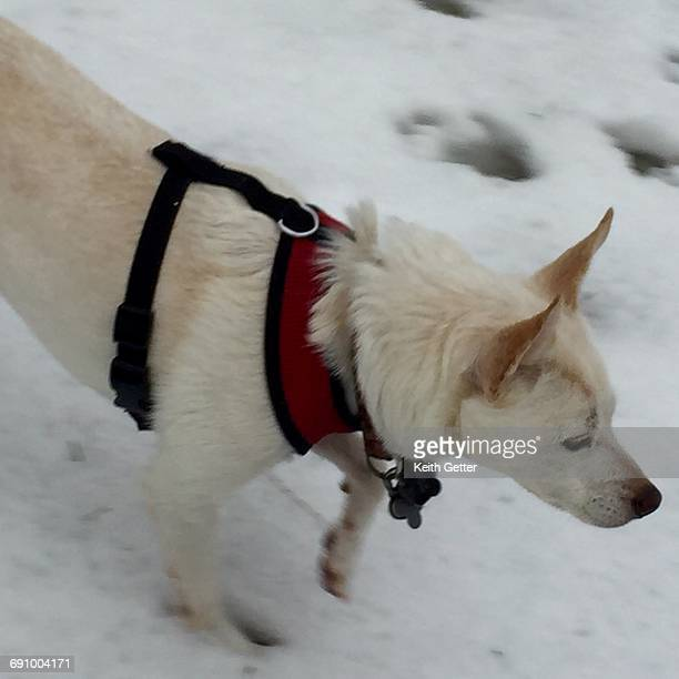 pets in the snow - fort greene stock pictures, royalty-free photos & images