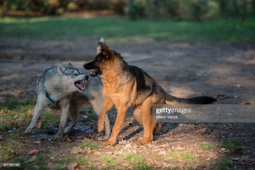 Pets on a Walk : Stock Photo