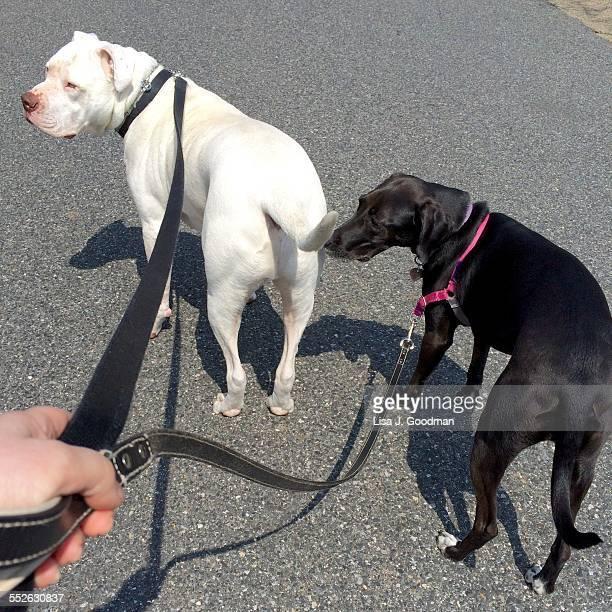 POV - Pets