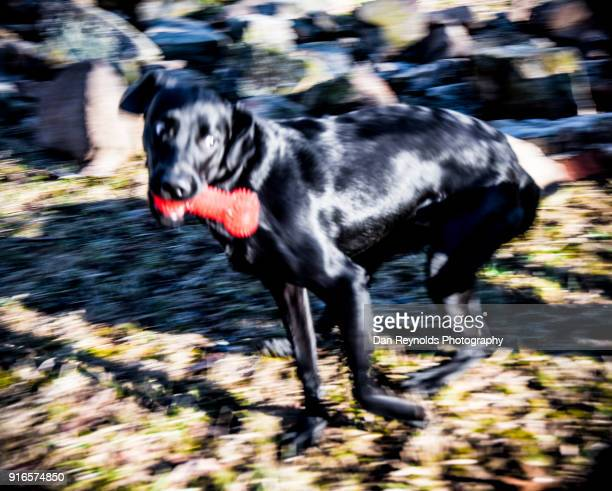 pets - dawn bess stock pictures, royalty-free photos & images